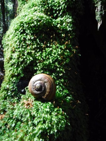 Canaan Downs Scenic Reserve: giant snail. a empty one at that but lots of them around, but only if you can spot them