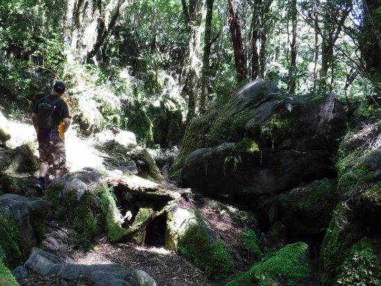 Canaan Downs Scenic Reserve: beautiful