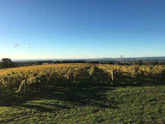 Millthorpe, Australia: Winery Tour