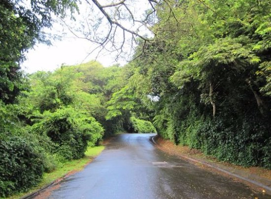 Igwalagwala Guest House: Our beautiful streets in St Lucia