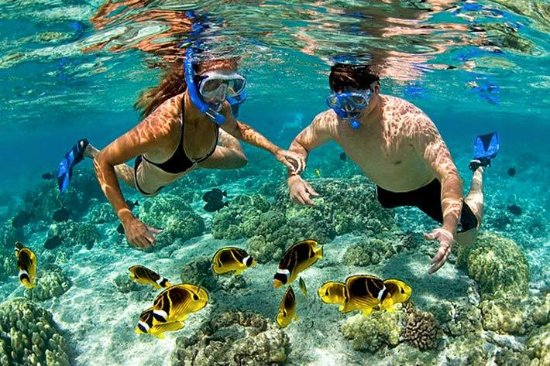 Igwalagwala Guest House: We can book an exciting snorkeling adventure for you, then you can be goggling all day long...