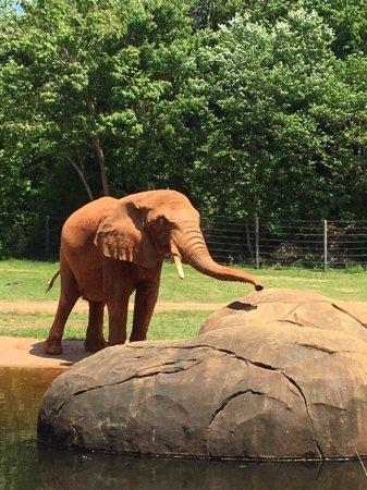 Asheboro Nc Zoo Weather - Best Zoo Image 2018
