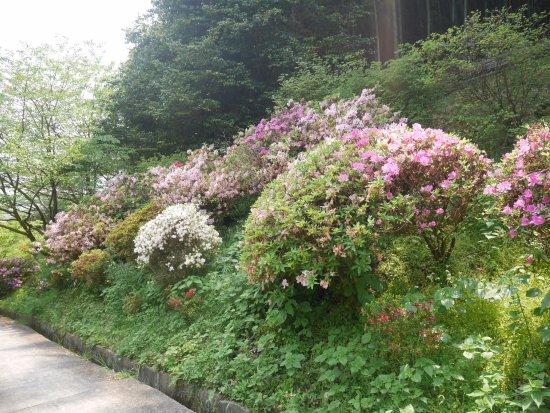 Kohoku-machi, Ιαπωνία: 境内の花