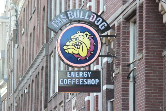 Picture of the bulldog hotel amsterdam for Bulldog hotel amsterdam
