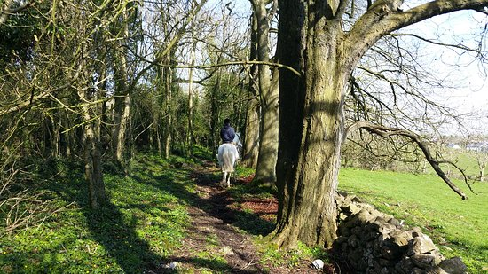 Quin, Irlanda: forest trail