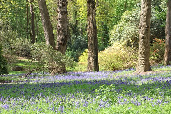 Sheringham, UK: Bluebells