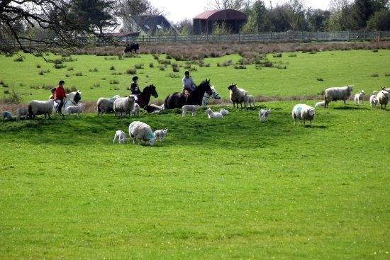 Quin, Irlanda: nature at its best