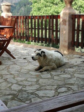 Villahermosa del Rio, Spain: DANZA, una grandisima perrita, muy buena y te guia por la ruta de la montaña