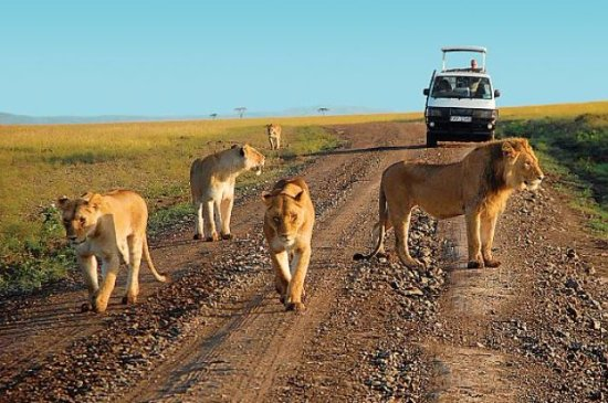 Nature Exploration Safaris