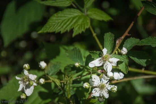 Rosman, Северная Каролина: flowers in bloom