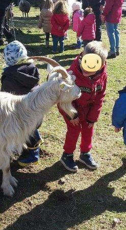 Omegna, Italia: Il contatto con gli animali ci differenzia