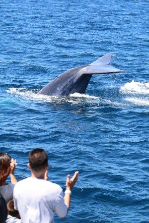 Dana Point, Kaliforniya: Whale Watching