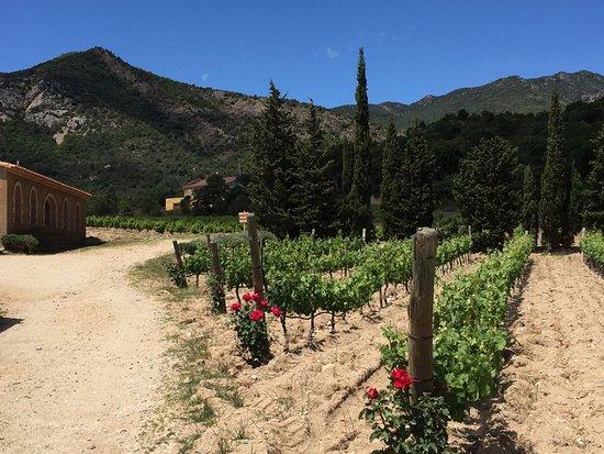 Cantallops, España: IMG-20170507-WA0094_large.jpg