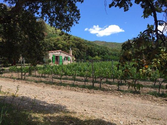 Cantallops, España: IMG-20170507-WA0088_large.jpg