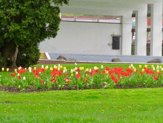 Вернон, Канада: Gorgeous flowers