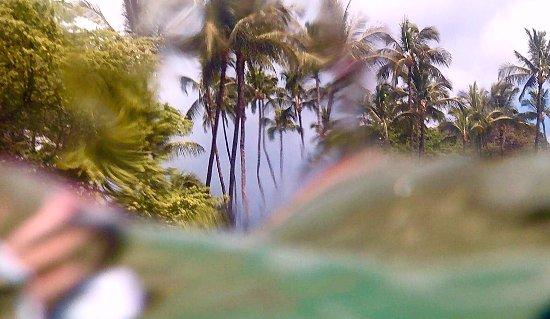 Aloha Surf Hostel: photo1.jpg