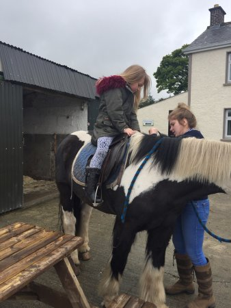 Strabane, UK: pony trekking long or short walks only £5 or something great value