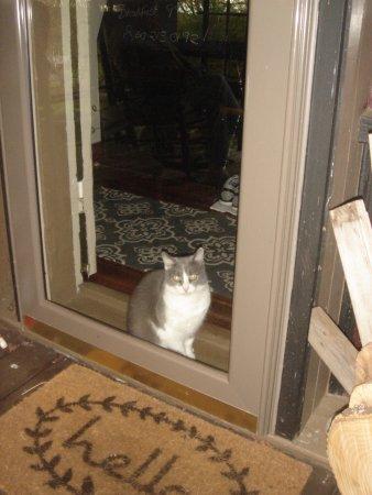 Preston, CT: The friendly indoor cat, Kit.