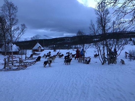Arctic Adventure Tours : Zona di partenza