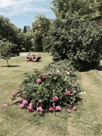 Clinton, NY: FLOWERS IN THE YARD