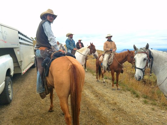 Clark, CO: Cattle Drive