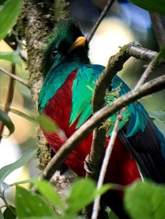 San Gerardo de Dota, Costa Rica: photo5.jpg