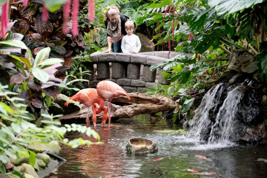 Central Saanich, Kanada: Perfect for Families - Flamingos
