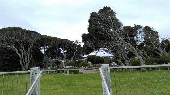 Yallingup, Australia: IMAG0636_large.jpg