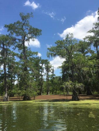 LeBlanc Swamp Tours: photo0.jpg