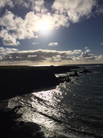 Mendocino Seaside Cottage: 60 second walk from room