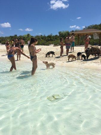 Robert's Island Adventures : photo1.jpg