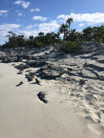 Robert's Island Adventures : photo3.jpg