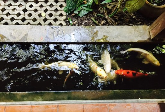 Santitham Guest House: A koi moat surrounds the breakfast area
