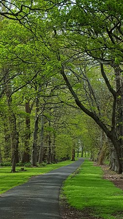 Morrinsville, New Zealand: Driveway in Spring