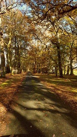 Morrinsville, New Zealand: Driveway in Autumn