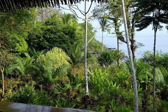 Copa de Arbol Beach and Rainforest Resort: Beach sight from the restaurant