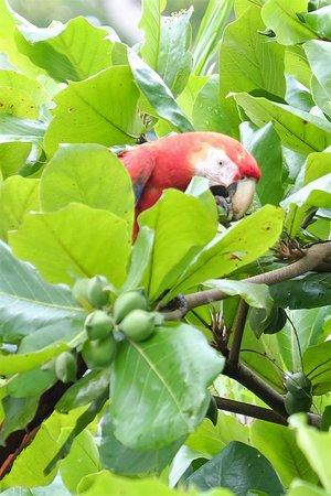 Copa de Arbol Beach and Rainforest Resort: Birds on the beach