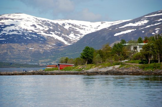 Sightseeing and Fjordcruise with...