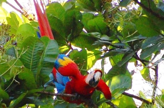 Private Puntarenas Shore Excursion...