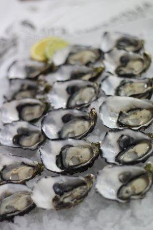 Tweed Heads, Australien: Fresh pacific plate oysters
