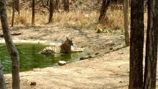 Baghvan Taj Wilderness Lodge : IMG-20170507-WA0028_large.jpg