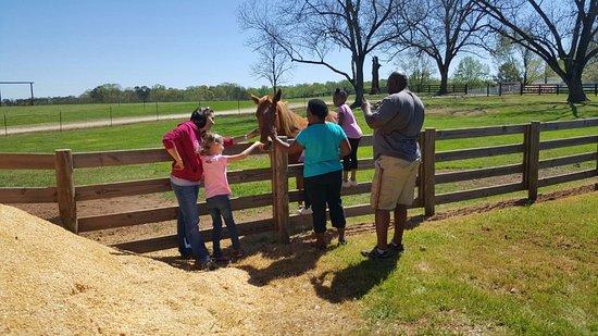 McDonough, GA: free petting zoo