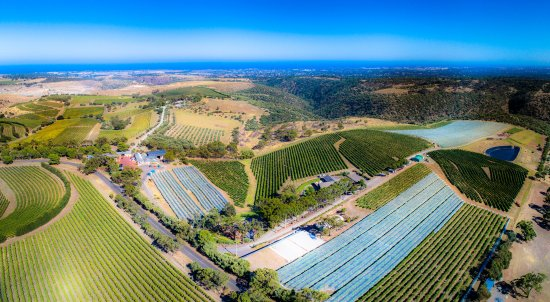 Aerial view of the winery looking back to McLaren Vale and Gulf St Vincent