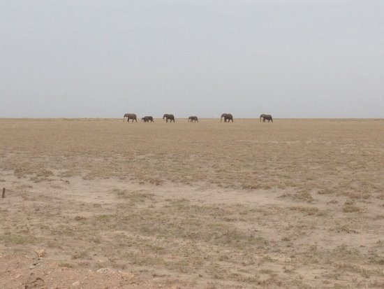 Amboseli National Park, Kenya: Herd of Elephants