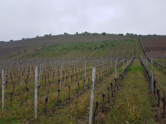 Terroir f Randersacker
