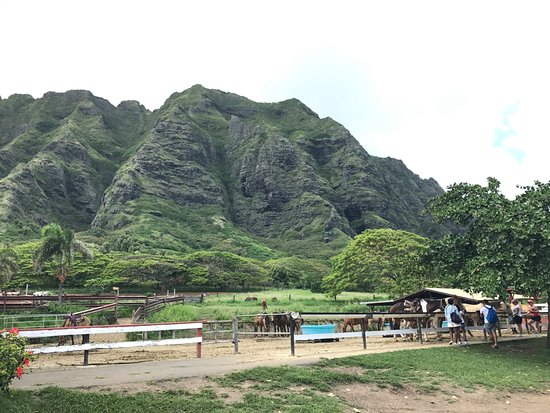 Kaneohe, HI: 馬廄區
