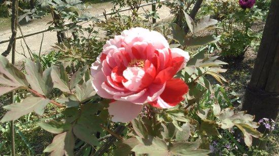 Shiranoe Botanical Garden