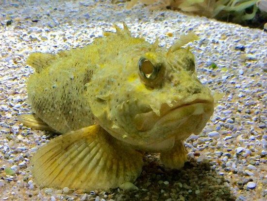 Woods Hole Science Aquarium: photo4.jpg