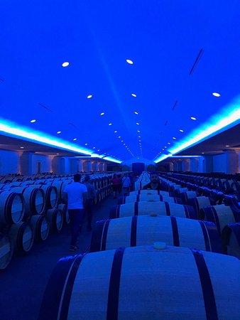 Ophorus Bordeaux Wine Day Tours : photo3.jpg