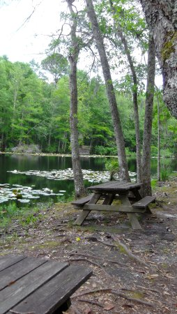 Hampton, Carolina del Sur: Picnic tables on the pond